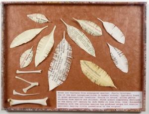 Charta Catalogus